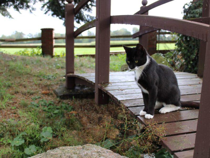 Katze-Mia-scaled
